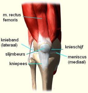 Het kniegewricht