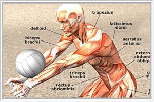 Sportfysiotherapie
